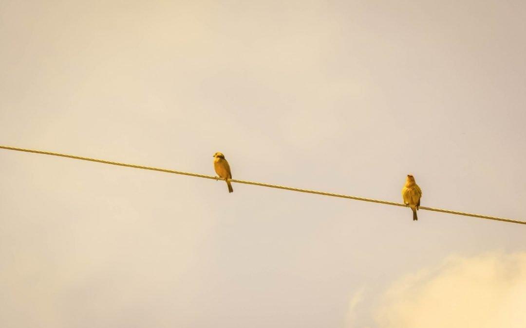 Comunicare la sostenibilità: le mosse per orientarsi e (ri) cominciare